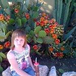Кактусы цветут