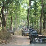 The park & safari