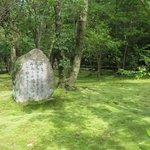 秋篠寺絨毯のような苔庭