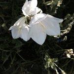 Flowers pretty