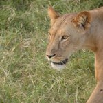 Foto de Africa Veterans Safaris - Day Tours