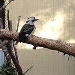 Enjoy our wonderful birdlife