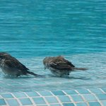 Birds cooling down in the pool