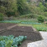 Fields of organic farming