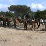 de paarden staan rustig te wachten voor de volgende tocht