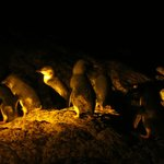 Up close with the fairy penguins