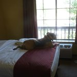 Travelin' Jack LOVES a room with a view!  And every Lodge at Sierra Blanca room has amazing view