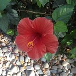 Hibiscus all around (usually with hummingbirds hovering over)
