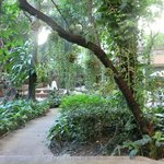 A jungle oasis