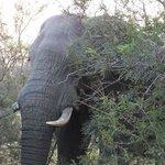 Lots of elephant adventures
