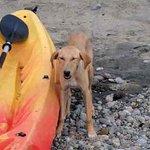 Friendly little island dog