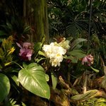 Orchids inside the Dome
