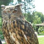 Owl at the Bird Show