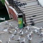 The birds fighting