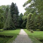 Jardin con mucho verde y tranquilidad