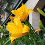 Beautiful Flowers on Pool Deck