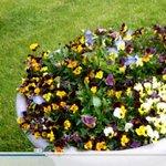 Flowering Bloom Pot