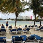 Área de playa con bastantes sillas y encima muchas palmeras, quienes se quieren broncear deben i