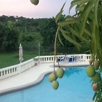beautiful pool area, and gresh mangoes!