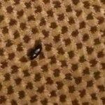 One Roach