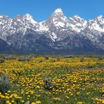 Spectacular spring scenery in the Grand Tetons!