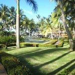 las palmeras y el jardin