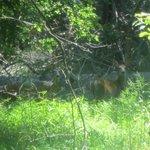 Deer at Great Falls