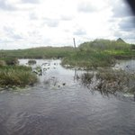 Everglade airboat ride