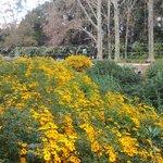 Winter Colour of Mexican Garden