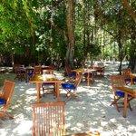 Mittagessen unter schattigen Bäumen