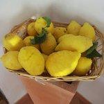 I limoni della signora!