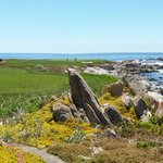 17 mile drive Vista near Bird rock