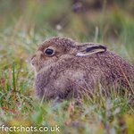A lovely baby hare