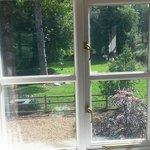 Window view from ground floor room