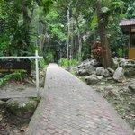 Poring Hot Springs & Canopy Walk