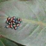 Bugs on a leaf