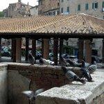 Piazza del Mercato a Siena