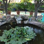 Pond in the garden, with water fountain. Very relaxing.
