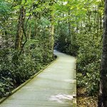 Boardwalk at Dingmans Falls