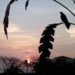 Atardecer desde el hotel con pájaro típico de la región