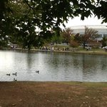 Big Spring Park and Ducks