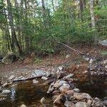 try walking across the creek on these rocks