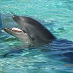 The resident wolphin at Sea Life Park-Hawaii
