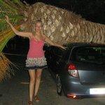 вот так пальма и рухнула,прямо на авто