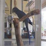 El Con Tropical Bird