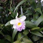 Una hermosa orquidea