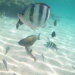 beach & fish