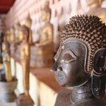 Loadsa buddhas