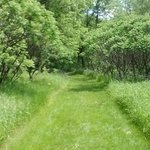Walking from grassland into forested area. Looked like a scene from a storybook.