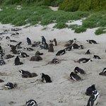 Penguin Colony May 2014